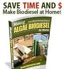 algae-biodiesel.jpg